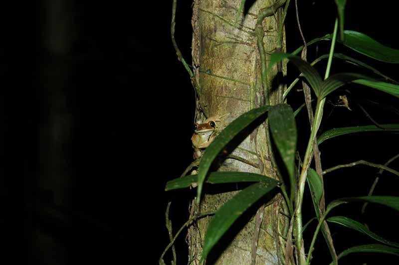 02-night-walk-frog.jpg