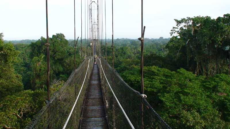 03-canopy-bridge.jpg