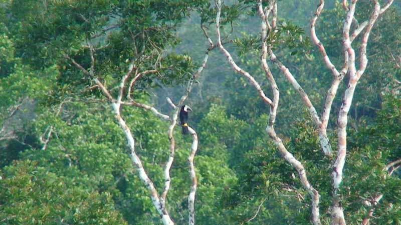 04-canopy-toucan.jpg