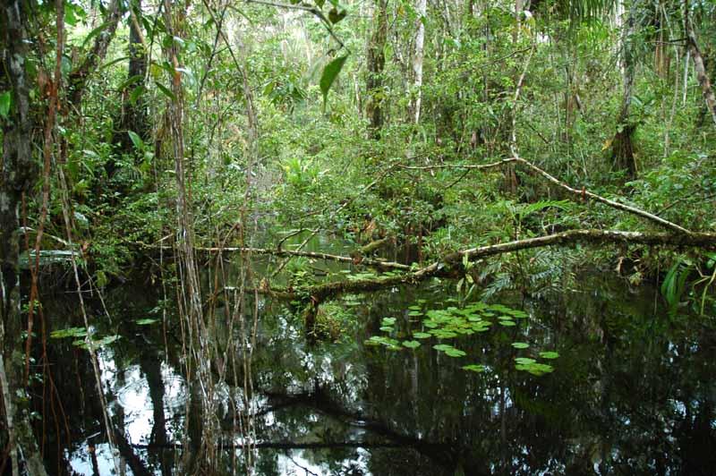 06-swamp-walk.jpg
