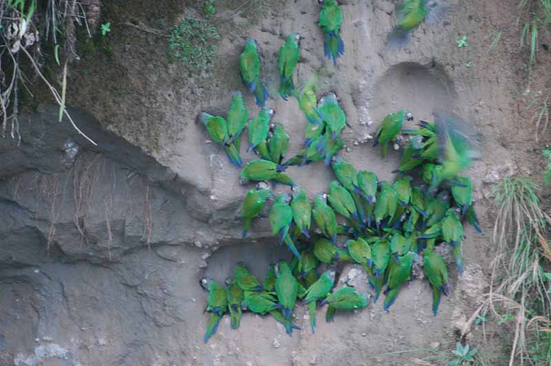 07-parrot-clay-lick.jpg
