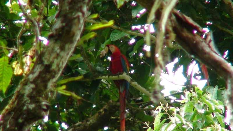 08-macaw.jpg