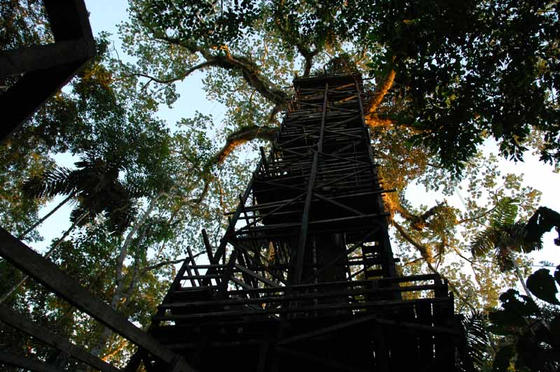 09-tree-house-canopy.jpg